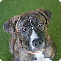 Adopt A Pet :: Saturday - Mission Viejo, CA