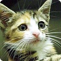 Adopt A Pet :: Minnie - Secaucus, NJ