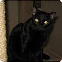 Adopt A Pet :: Minnie - Phoenix, AZ
