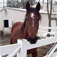 Adopt A Pet :: Willow - Dewey, IL