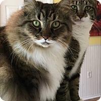 Adopt A Pet :: TangoPresto - Monroe, NC