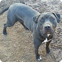 Adopt A Pet :: Clarisse - Mesa, AZ