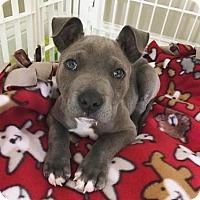 Adopt A Pet :: Hugo - Dallas, GA