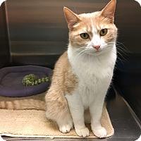 Adopt A Pet :: Milly - Arlington/Ft Worth, TX
