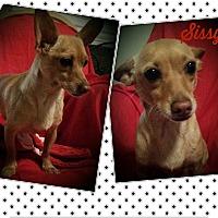 Adopt A Pet :: Sissy - Buffalo, NY