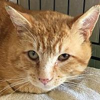 Adopt A Pet :: Jackson - Longview, WA