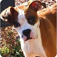 Adopt A Pet :: CalypsoADOPTED - Toronto/Etobicoke/GTA, ON