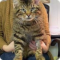 Adopt A Pet :: Simba - Dover, OH