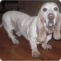 Adopt A Pet :: Emmett - Phoenix, AZ