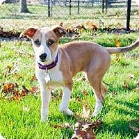 Adopt A Pet :: Delightful DeeDee - Brooklyn, NY