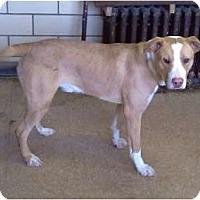 Adopt A Pet :: Rascal - Chicago, IL