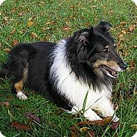 Adopt A Pet :: Shadow - Abingdon, MD