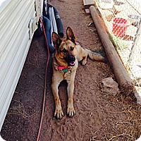 Adopt A Pet :: Sarge - Victorville, CA