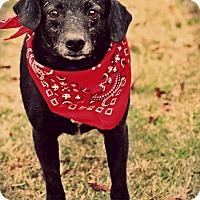 Adopt A Pet :: Gus - Cranford, NJ