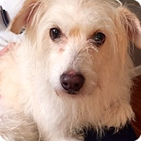 Adopt A Pet :: Aspen - North Bend, WA