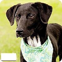 Adopt A Pet :: Otto - Courtesy Post - Encino, CA