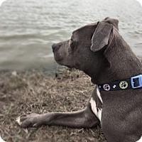 Adopt A Pet :: Poppy - Chattanooga, TN