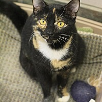 Adopt A Pet :: Sheeba - Hammond, LA