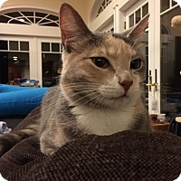 Adopt A Pet :: Muffin - Harrison, NY