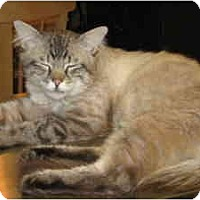 Adopt A Pet :: Petey - Loveland, CO