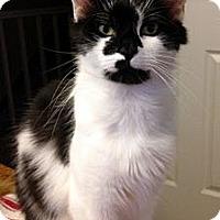 Adopt A Pet :: Delilah - Alexandria, VA