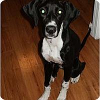 Adopt A Pet :: Tulip - Arlington, TX