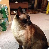 Adopt A Pet :: Simba - Pittstown, NJ