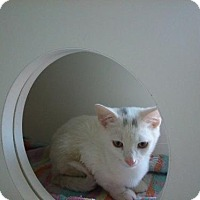 Adopt A Pet :: Ice - Hamilton, ON
