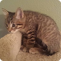 Adopt A Pet :: Anduin - Irvine, CA