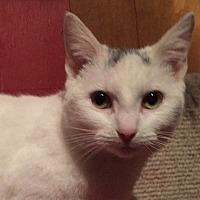 Adopt A Pet :: Sassy - Somerset, KY