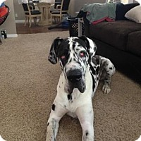 Adopt A Pet :: Ruger - Warsaw, IN
