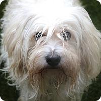 Adopt A Pet :: Winter - Norwalk, CT