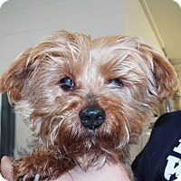 Adopt A Pet :: Missy - Grants Pass, OR