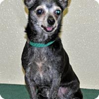 Adopt A Pet :: Felix - Port Washington, NY