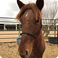 Adopt A Pet :: Oahu - Lancaster, CA
