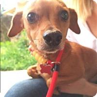 Adopt A Pet :: Ralph - Encino, CA
