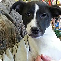 Adopt A Pet :: jan - Pompton Lakes, NJ