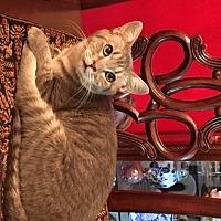 Adopt A Pet :: Wallis - San Antonio, TX