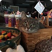Adopt A Pet :: Beth - Columbus, OH