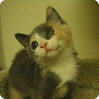 Adopt A Pet :: Caldiva - Milwaukee, WI
