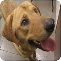 Adopt A Pet :: Brooks - Phoenix, AZ