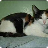 Adopt A Pet :: Cee Cee - New Egypt, NJ