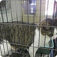 Adopt A Pet :: Izzy - Chesapeake, VA