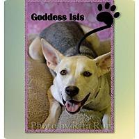 Adopt A Pet :: Isis - Higley, AZ