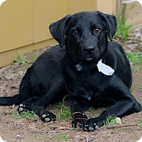 Adopt A Pet :: Huey - Lewisville, IN
