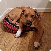 Adopt A Pet :: Luna - Toledo, OH