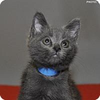 Adopt A Pet :: Spirit - Medina, OH