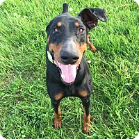 Adopt A Pet :: Winnew--adopted!! - New Richmond, OH