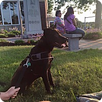 Adopt A Pet :: Blake - Acushnet, MA