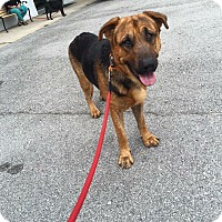 German Shepherd Dog Mix Dog for adoption in Jacksonville, North Carolina - Charlie